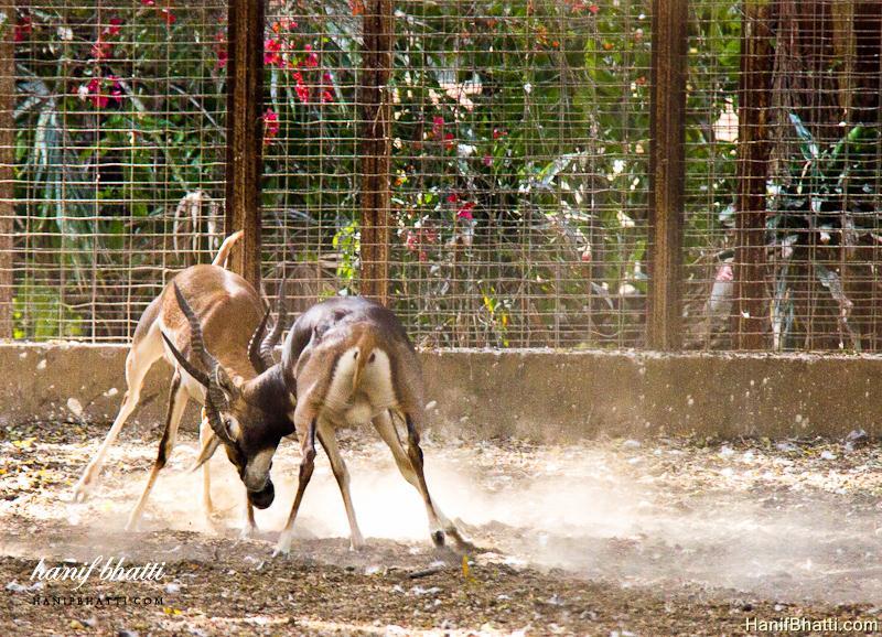 Karachi Zoological Garden Photo   High Quality (800x578)