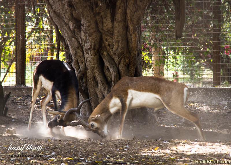 Beautiful Karachi Zoological Garden Photo   High Quality (800x571)