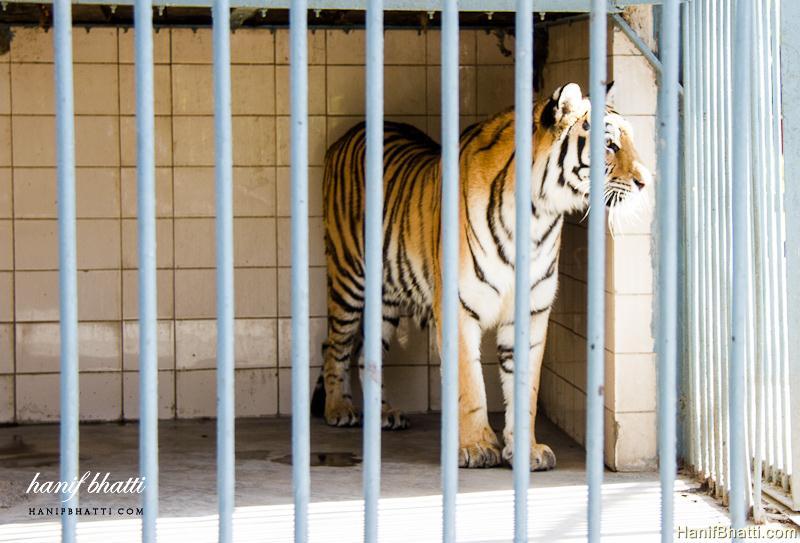 Karachi Zoological Garden