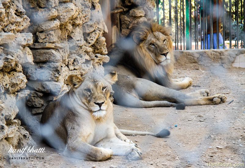 Charming Karachi Zoological Garden Photo   High Quality (800x551)