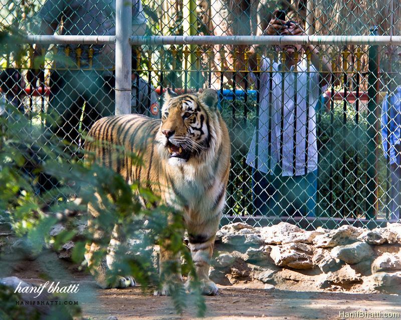 Karachi Zoological Garden Photo   High Quality (800x639)
