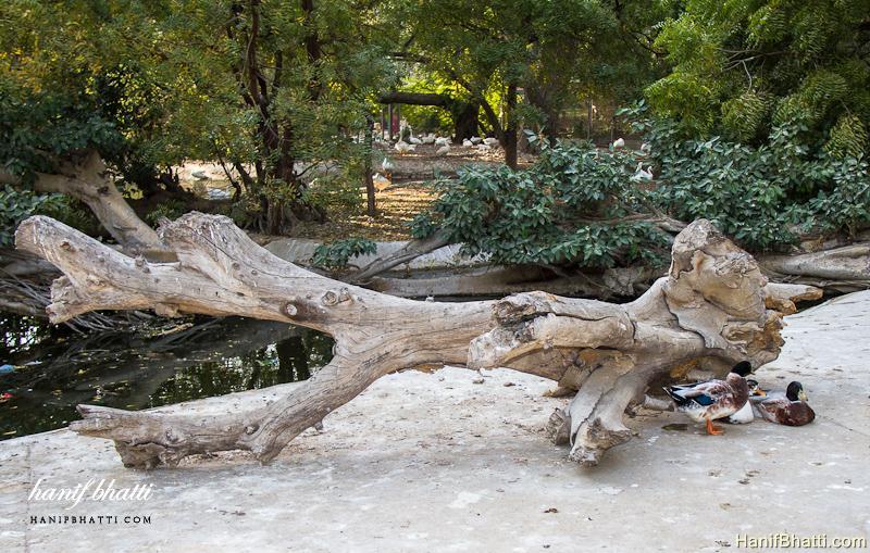 Karachi Zoological Garden. Photo   High Quality (800x509)