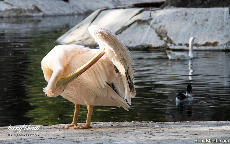Karachi Zoological Garden. Photo   High Quality (800x503)