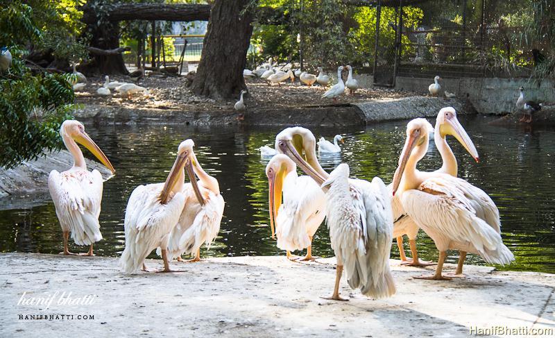 Karachi Zoological Garden. Photo   High Quality (800x487)